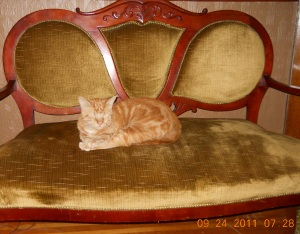 Carmel on the Parlor Seat